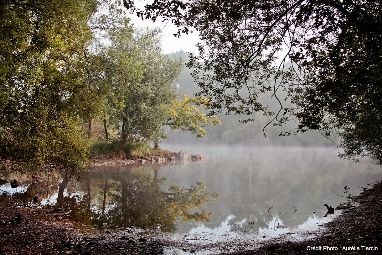 La forêt de Brocéliande dans le Morbihan