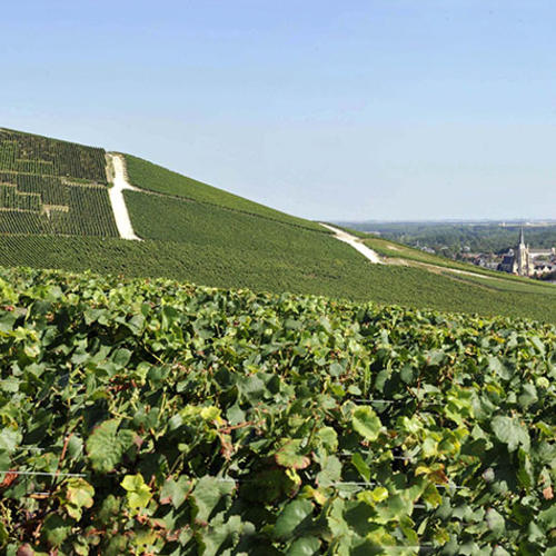 Vignobles près de Aÿ