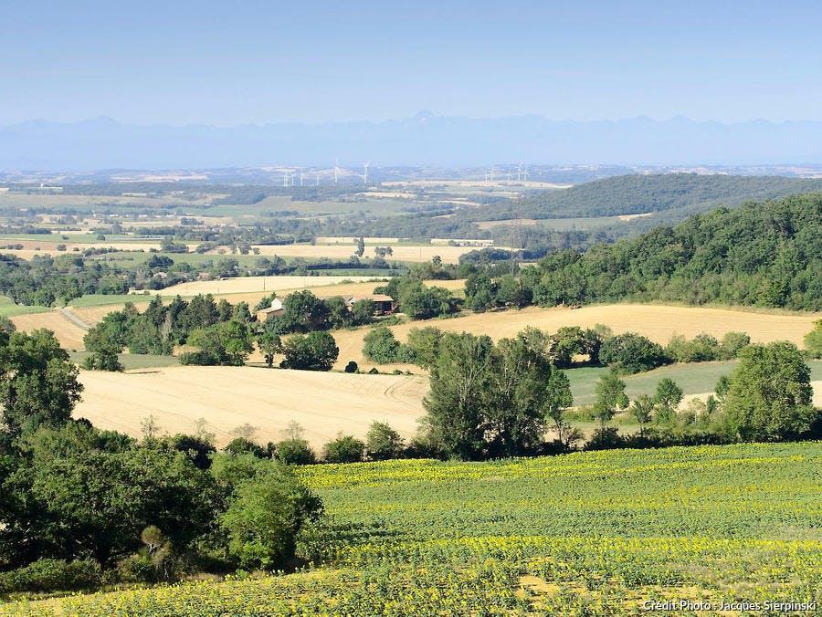 Campagne du Lauragais : champ de tournesol, blé et chaine des Pyrénées (Saint-Felix-Lauragais)