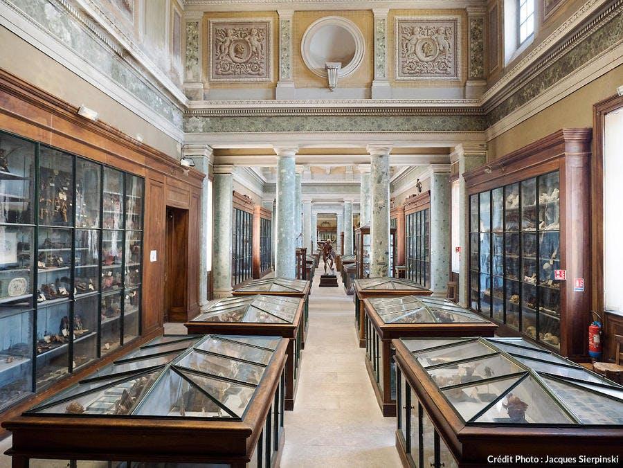 Dans le Conservatoire d'anatomie de Montpellier