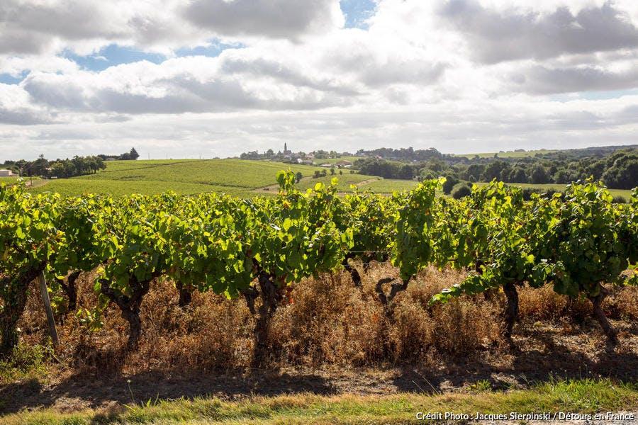 Vignoble du Pays nantais, berceau de l'appellation Muscadet-Sèvre-et-Maine