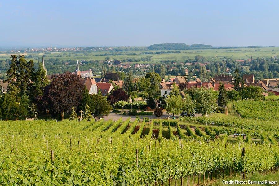 Le vignoble de Mittelbergheim, en Alsace