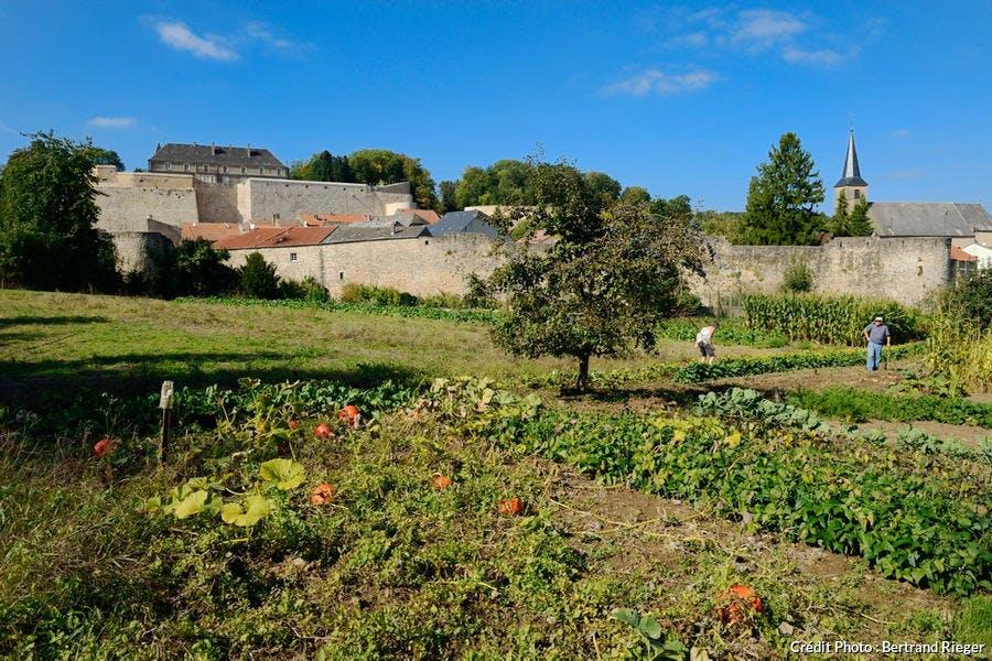 Couple cultivant son jardin à l'extérieur des remparts de Rodemack (Lorraine)