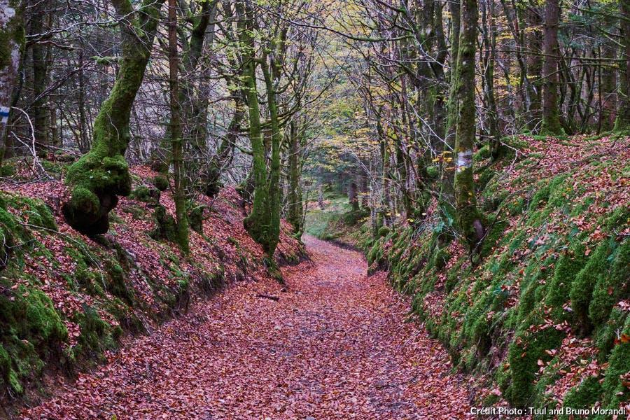 Sentier de randonnée dans le Morvan