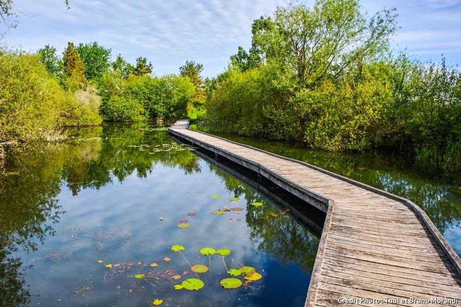 L'observatoire de l'étang Cistude dans le parc naturel régional de la Brenne