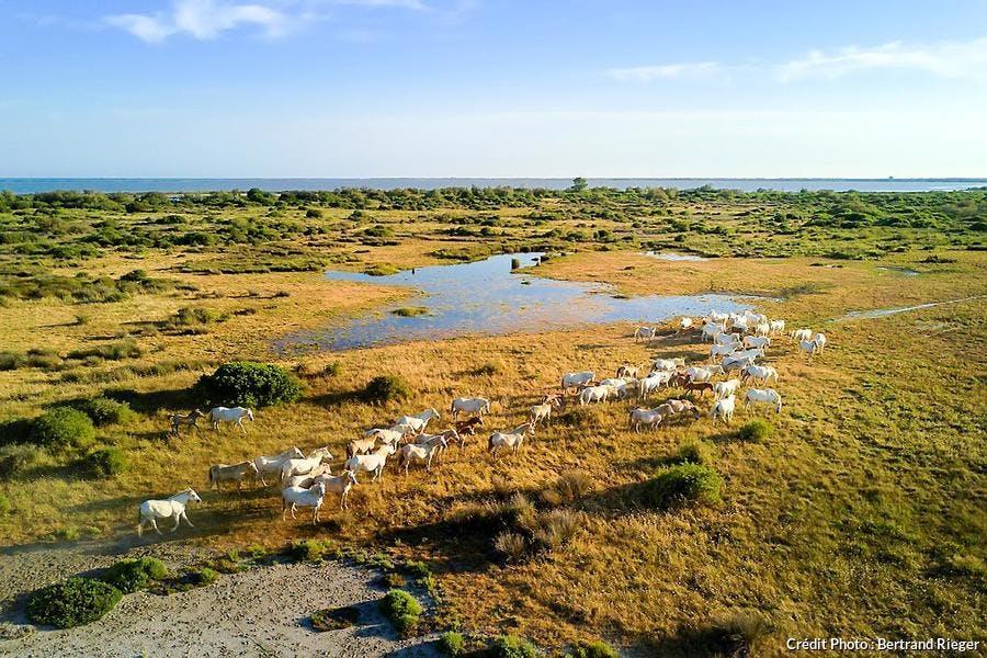 Le parc naturel régional de Camargue en Provence