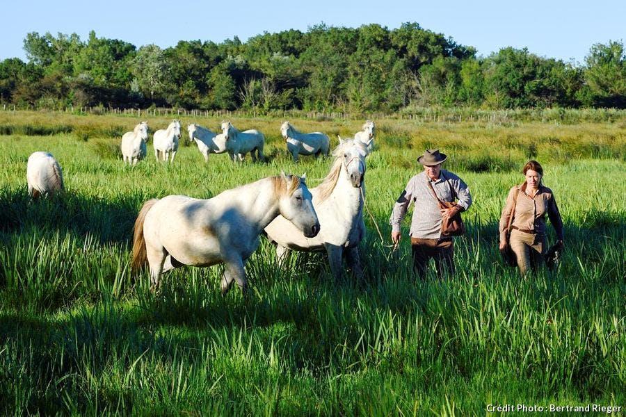 Gardians et chevaux camarguais