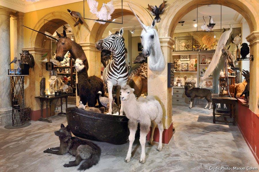 Bestiaire insolite dans le cabinet de curiosités d'Anne Orlowska, à Paris