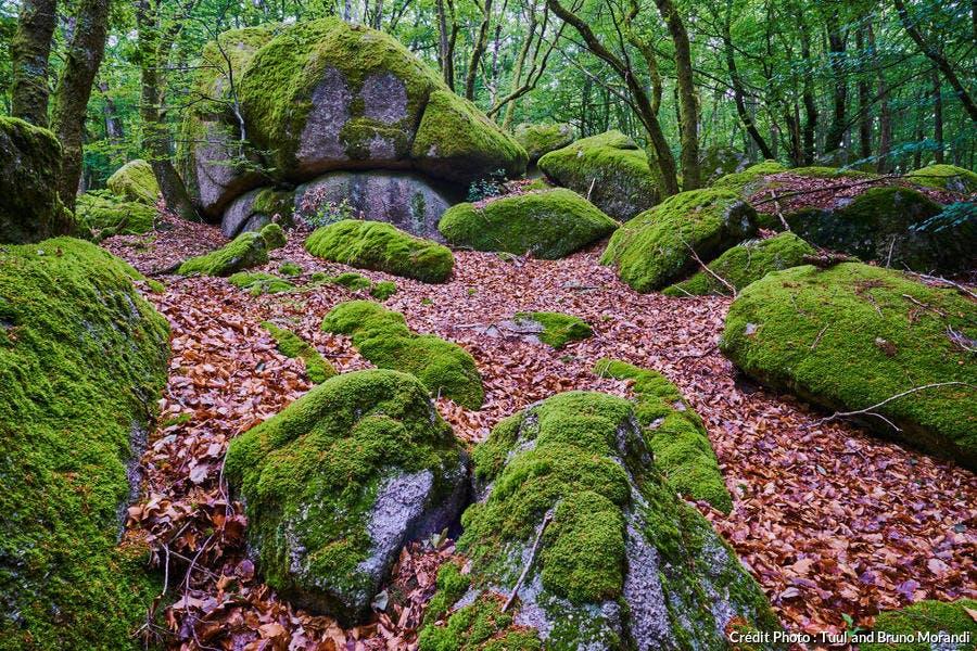 Les rochers du Carnaval à Uchon