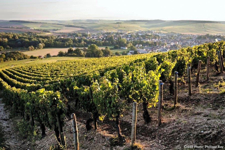 Le vignoble de Chablis, en Bourgogne
