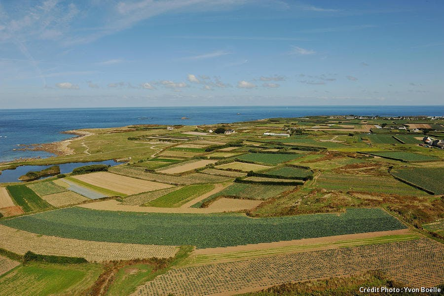 Cultures maraîchères sur l'île de Batz