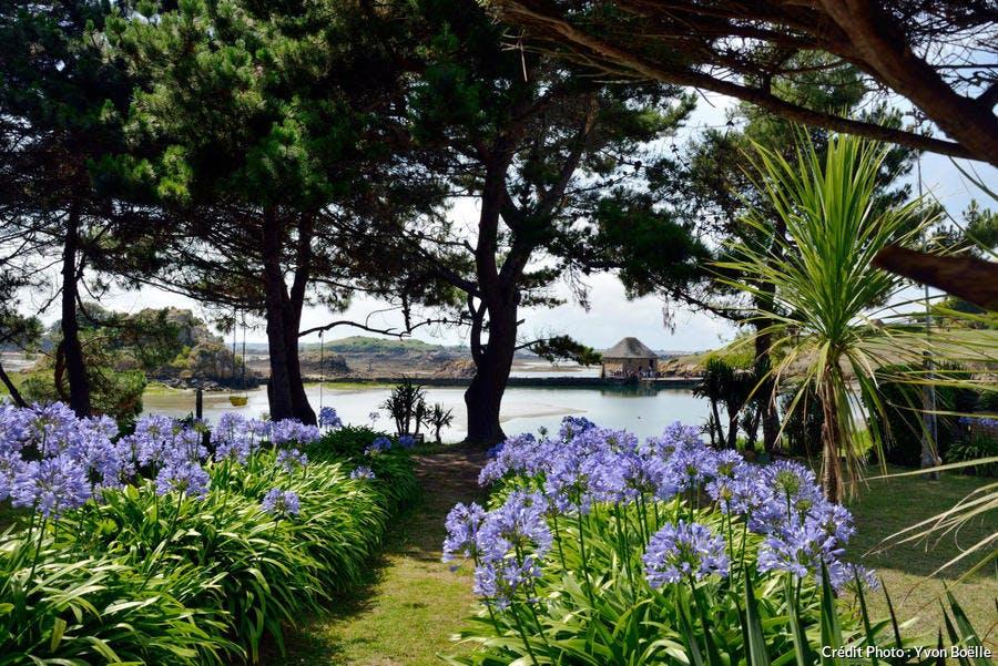 Île de Bréhat, moulin en arrière plan