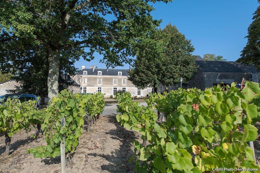 Chateau du coing dans le vignoble nantais
