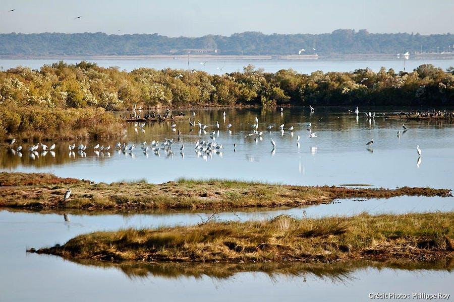 Réserve ornithologique du Teich dans le parc naturel des Landes de Gascogne
