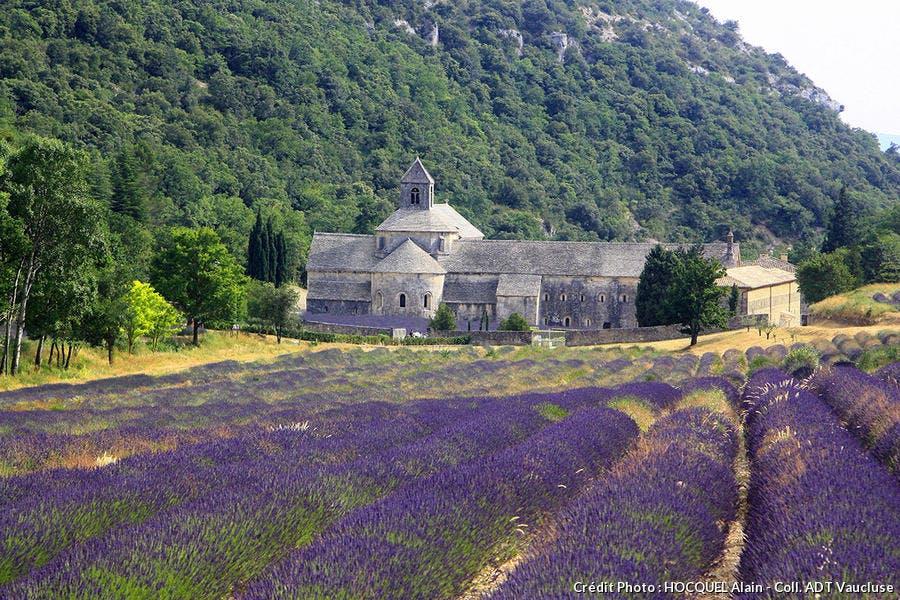 abbaye-de-senanque