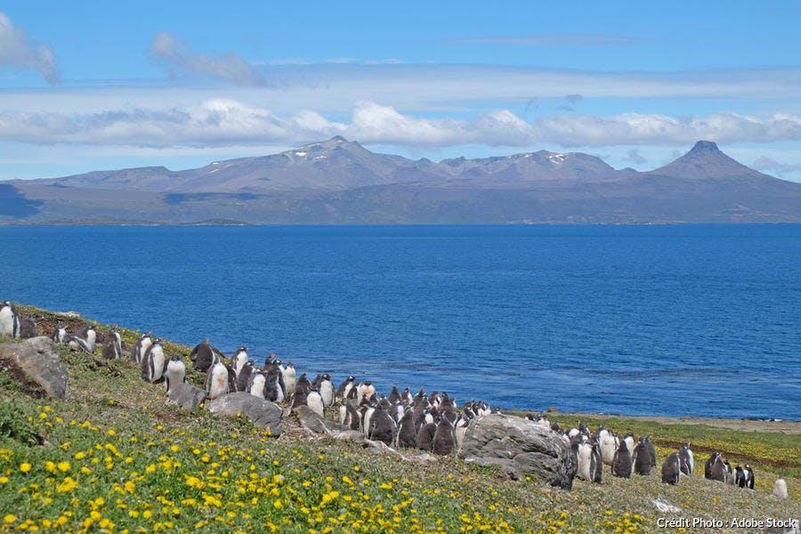 Les îles Kerguelen
