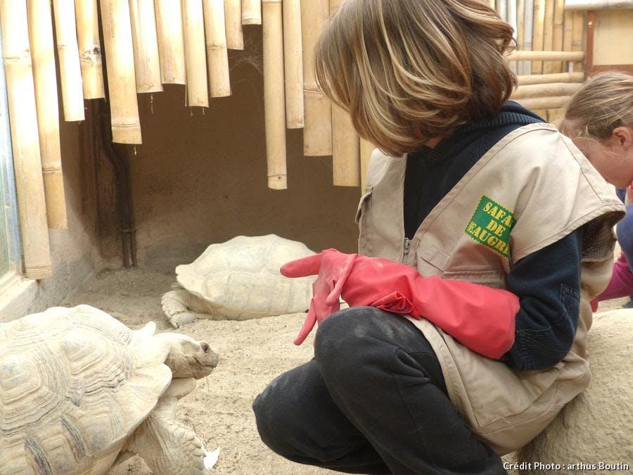 Responsable animalière du Safari de Peaugres donne à manger à une tortue