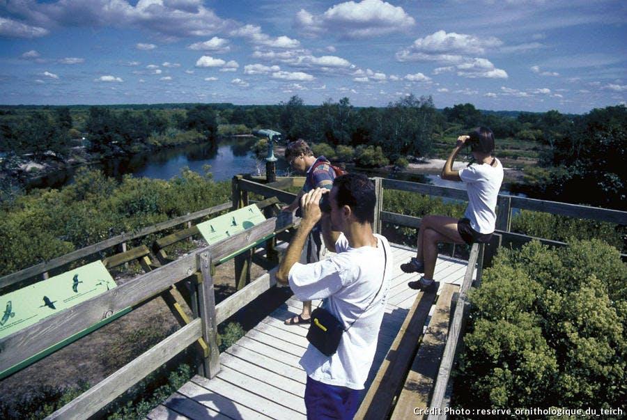 reserve_ornithologique_du Teich