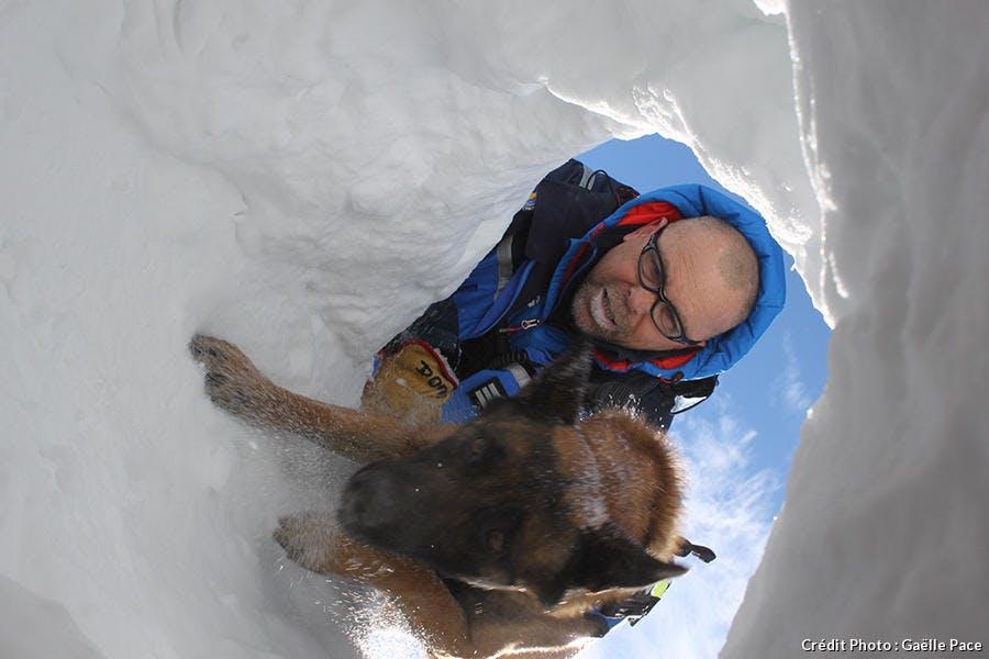 chien d'avalanche
