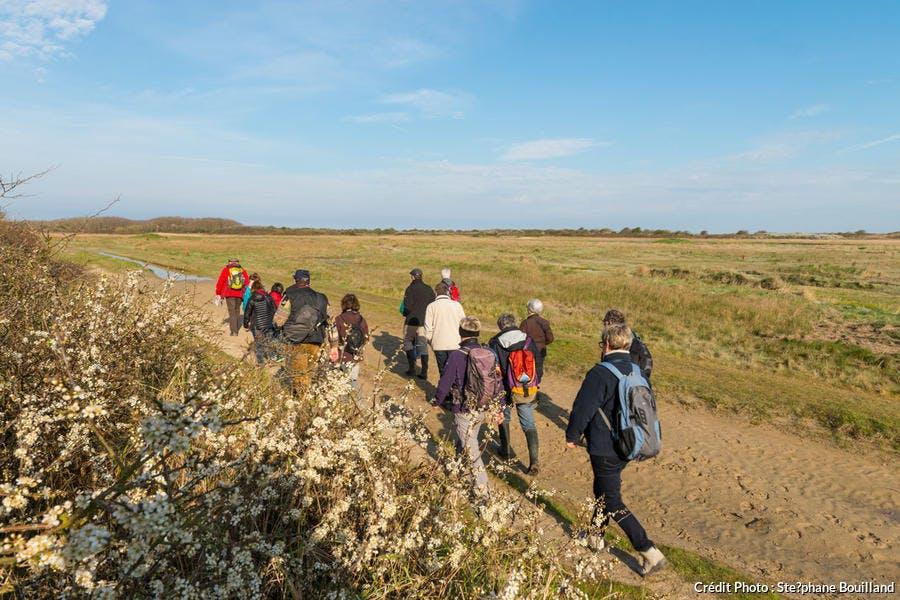 Promenade dans les dunes de la baie de Somme