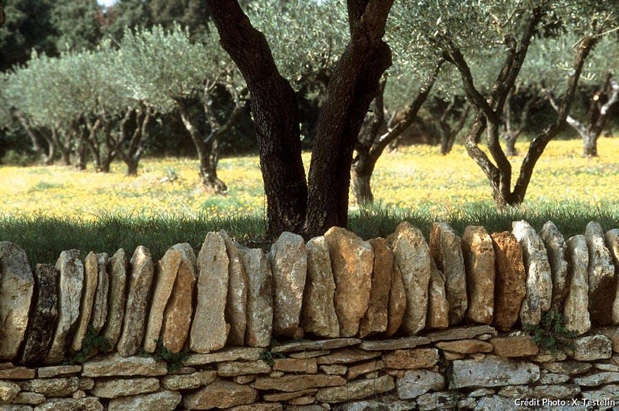 Murêt de pierres sèches