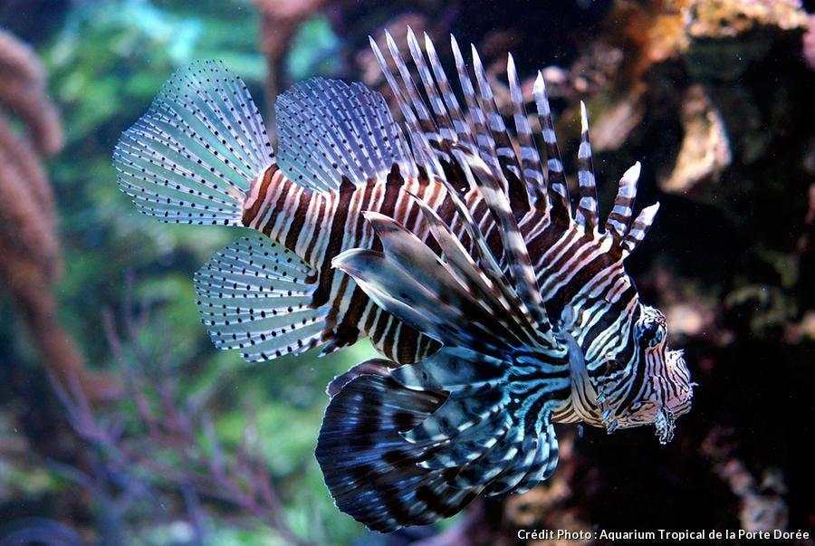 L'Aquarium tropical de la Porte Dorée