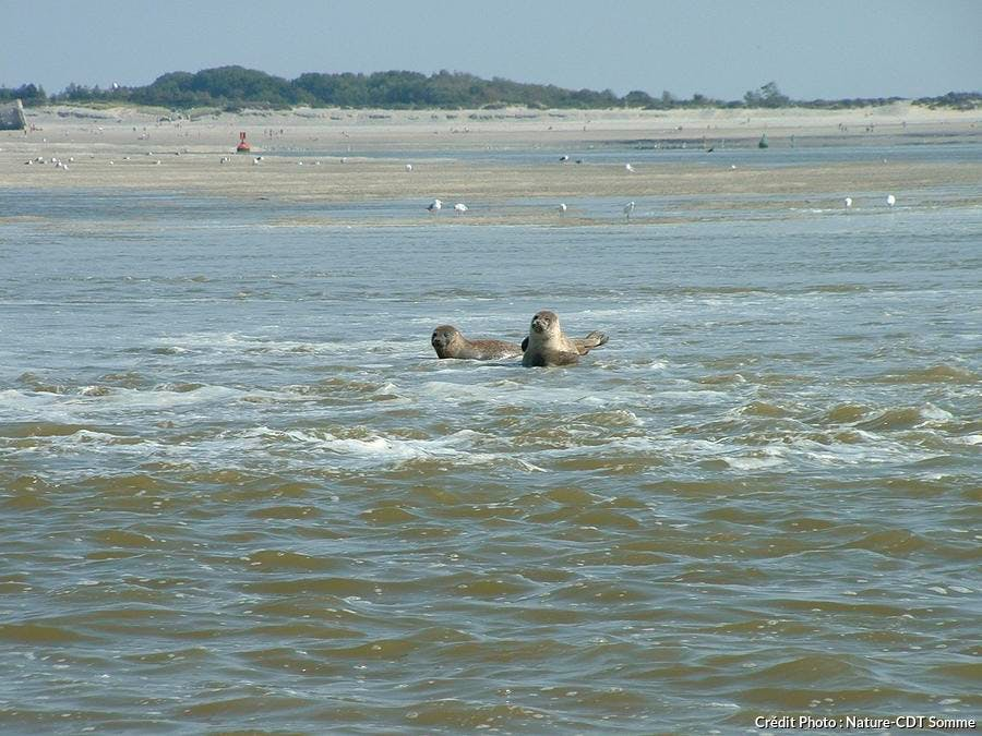 det_hs_france-sauvage-2013_baie-de-somme_phoques_picardie-nature-cdt-somme.jpg