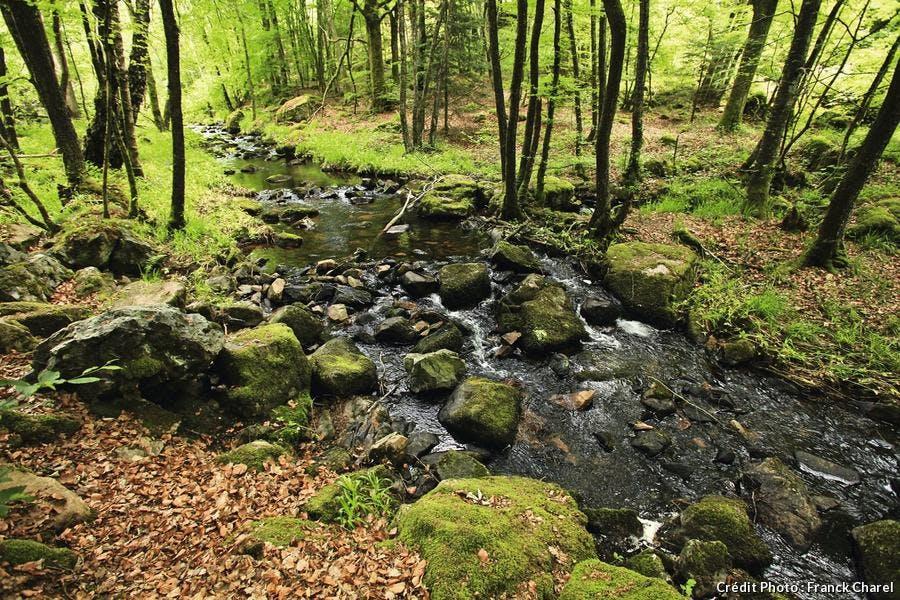 rivière prenant sa source au pied du Haut-Folin