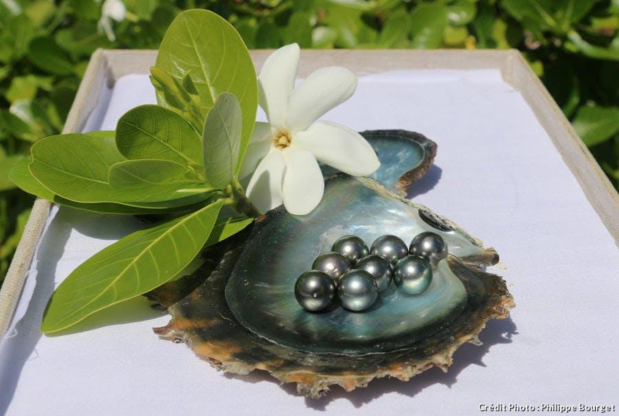 Perles locales, le trésor l'ile de Rangiroa en Polynésie française