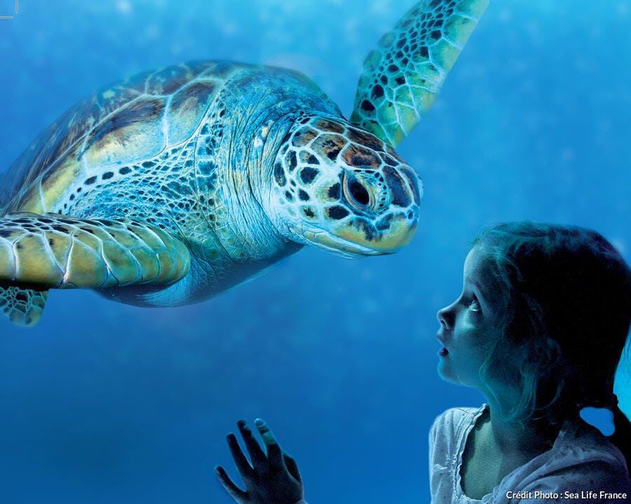 L'aquarium Sea Life de Marne-La-Vallée