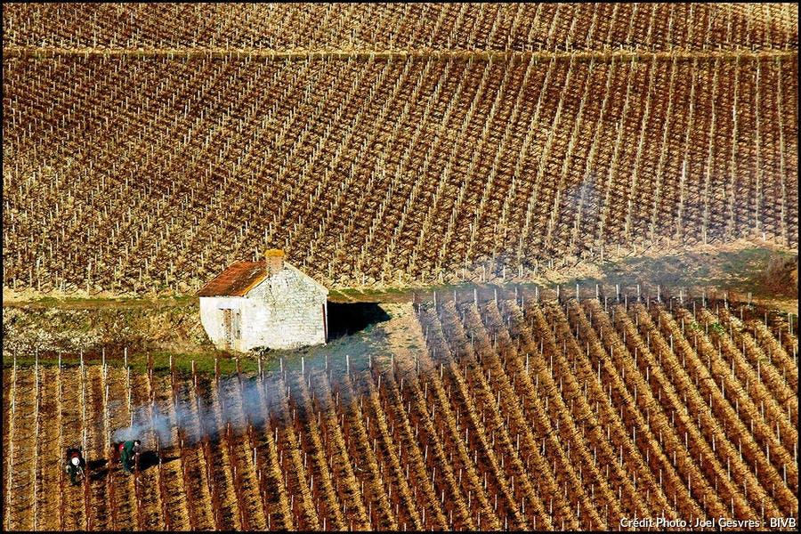 det_vignes-bourgogne_bivb.jpg
