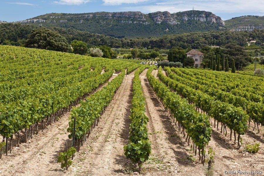 Vignoble de Cassis