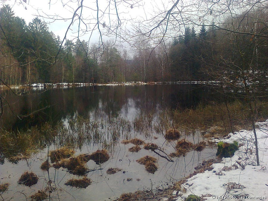 Plateau des Mille étangs en hiver
