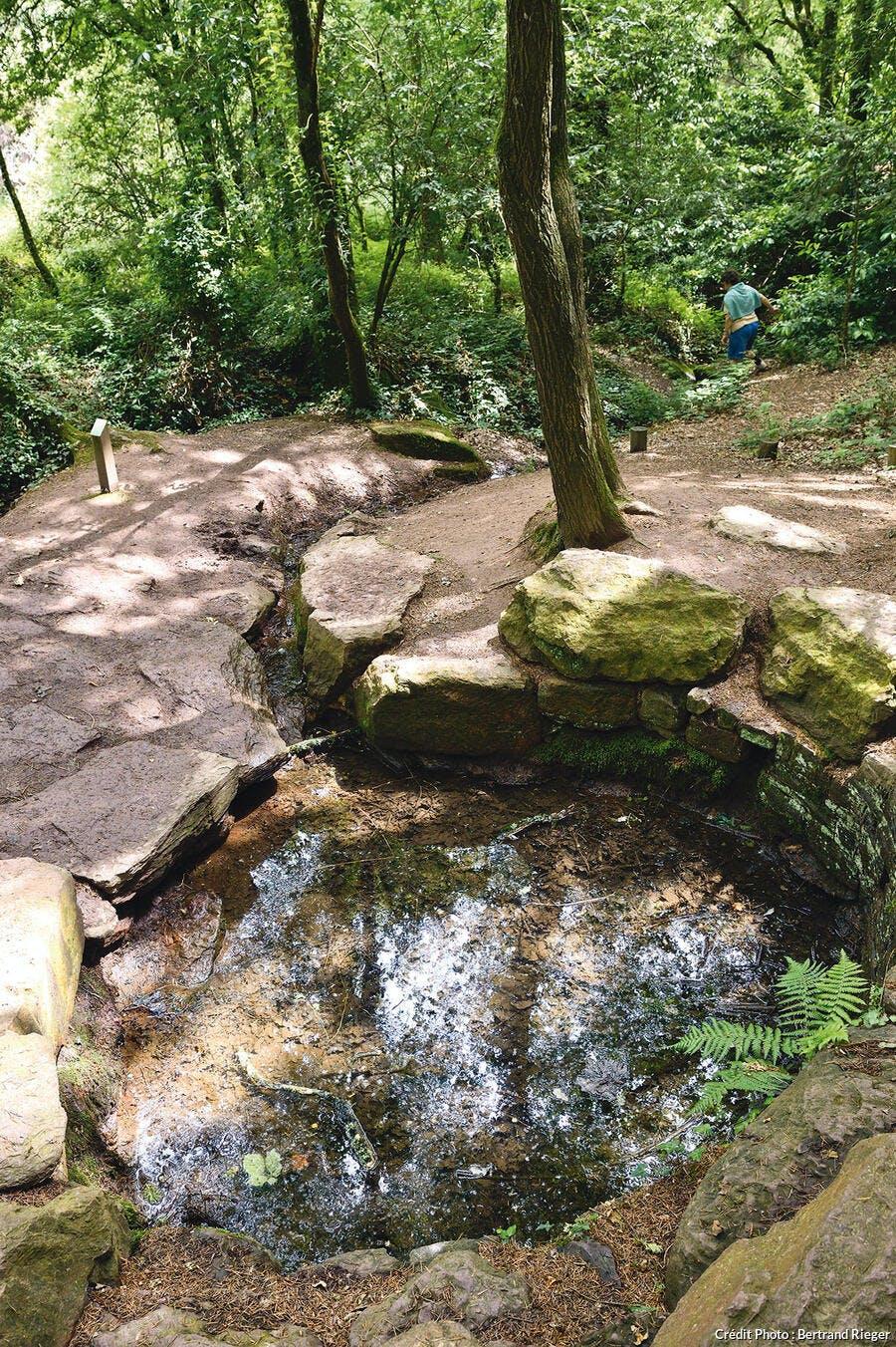 Forêt de Borcéliande - La fontaine de jouvence