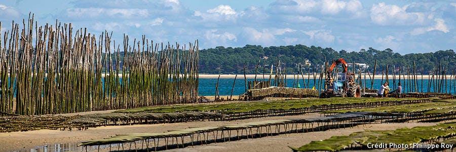 Les parcs à huîtres de Bélisaire au Cap-Ferret