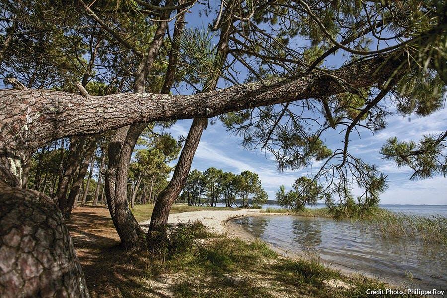 L'étang de Sanguinet dans les Landes