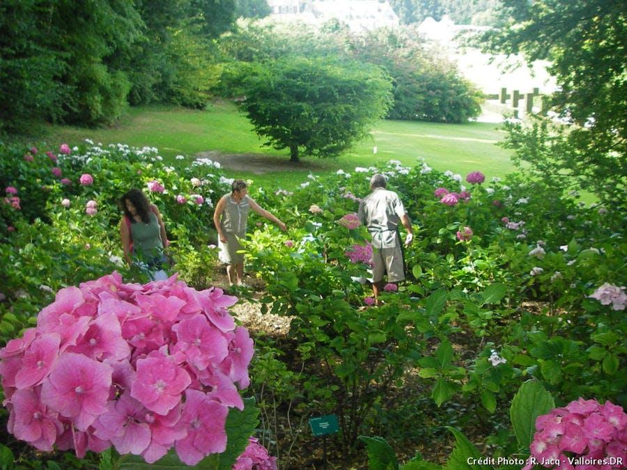 hortensia jardins de Valloires
