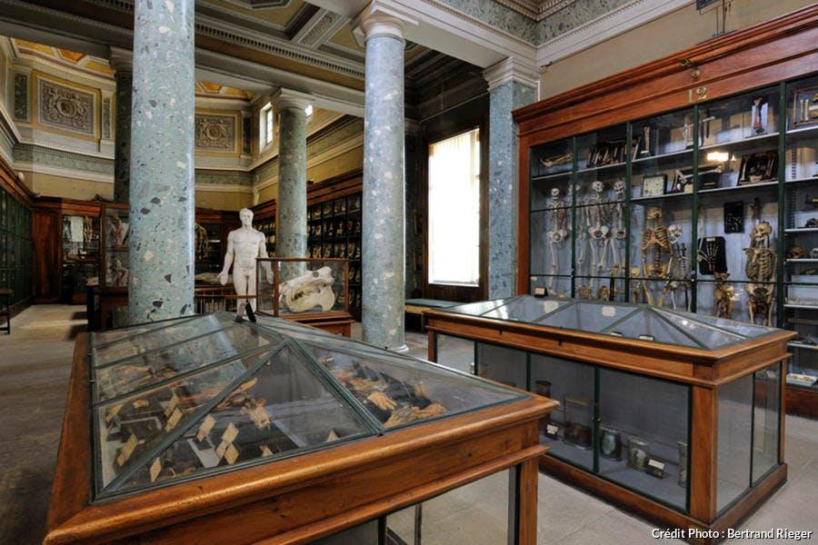 Conservatoire d'Anatomie de Montpellier