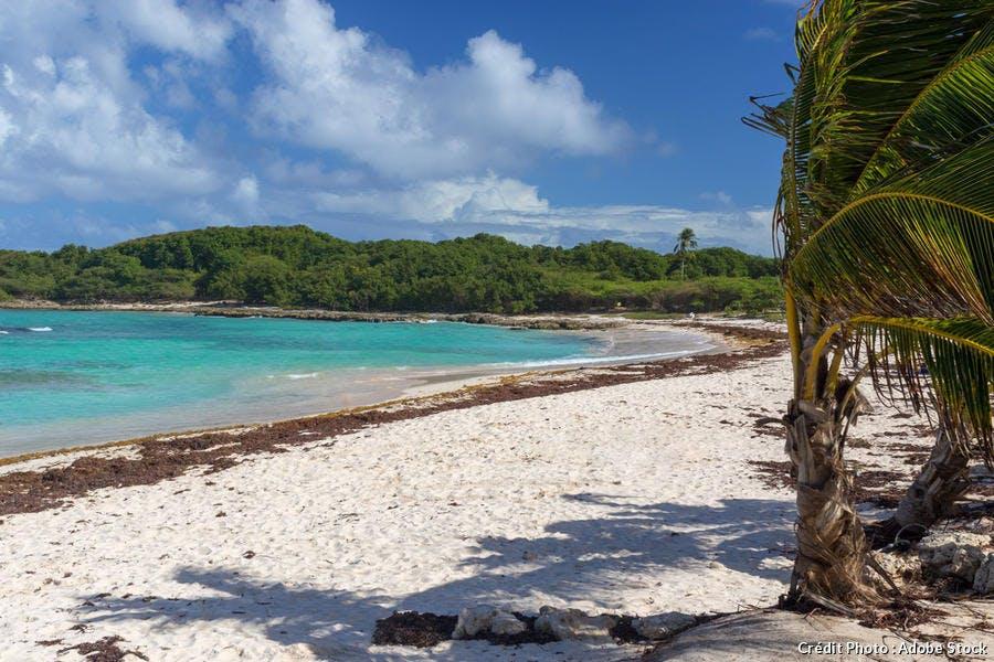 La plage de l'Anse à l'Eau, à Saint-François (Guadeloupe)