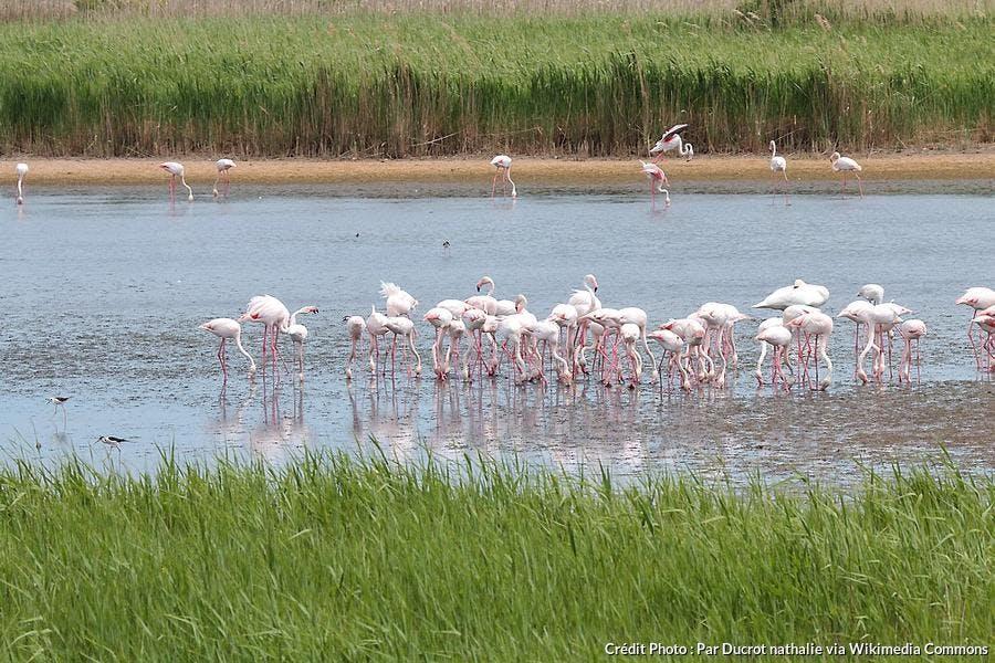 Le parc naturel régional de la Camargue