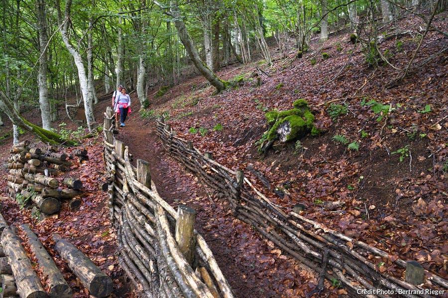 Randonnée familiale sur le puy de Vichatel, Chaîne des Puys d'Auvergne