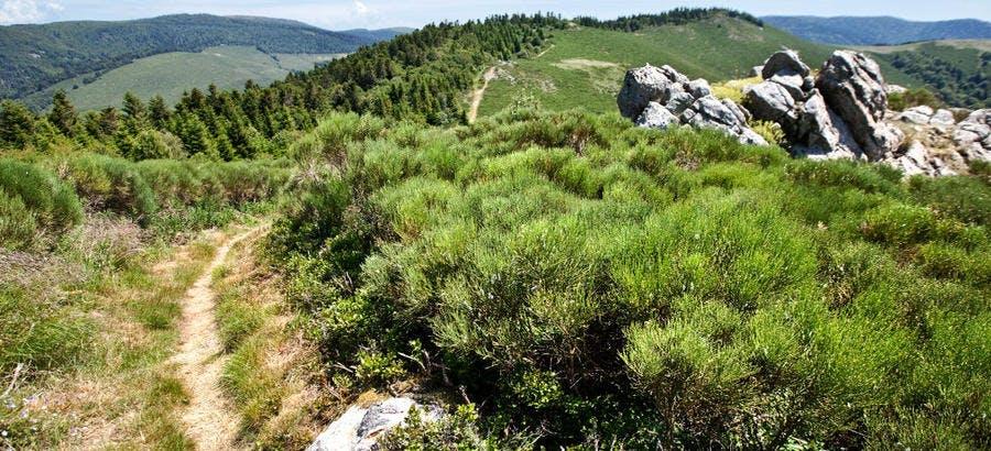 La piste du GR 7 des Monts d'Ardèche