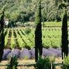 Domaine viticole de Coteaux Varois
