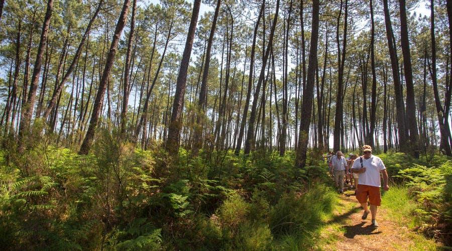 Parc Naturel de Landes de Gascogne